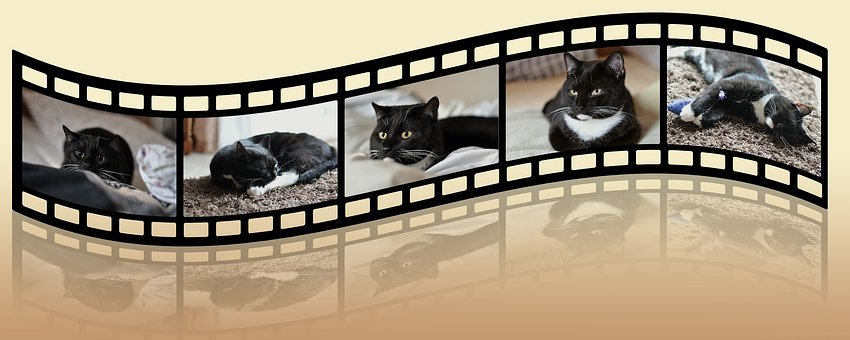 Cat, Black And White, Animal Shelter, Animal Welfare
