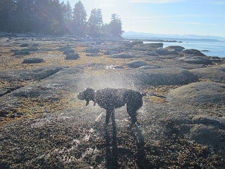 Dog, Ocean, Sea, Pet, Holiday, Summer, Beach, Animal