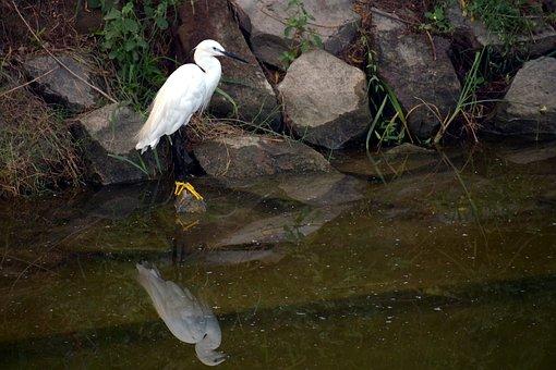Crane, Yellow Feet, Water Bird, Aquatic