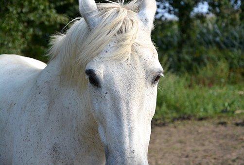 Horse, Head, Face, Next To Horse, Eyes, Portrait
