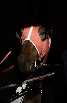 Horse, Career, Racecourse