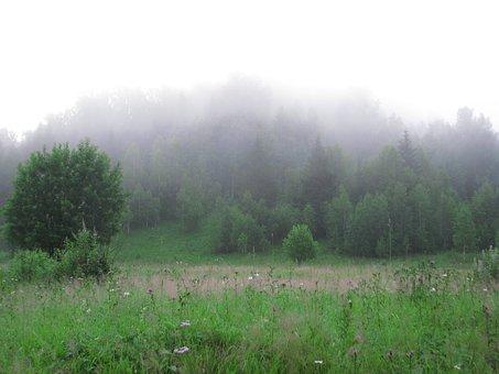 Fog, Forest Grass, Glade, Nature, Landscape, Morning