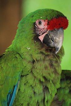 Mexico, Macaw, Animal, Bird, Exotic Bird, Ave, Wings