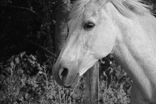 Horse, Nostril, Eye, Fort, Horseback Riding, Mouth