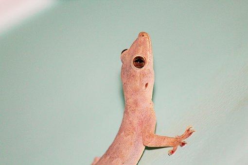 Lizard, Raptile, Home, Wild, Animal, Nature, Green