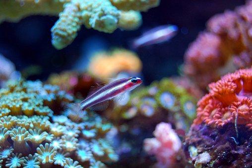 Fish, Coral, Reef, Sea, Underwater, Water, Ocean