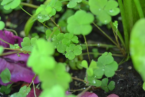 Leaves, Plant, Green, Green Leaf, Green Leaves, Garden