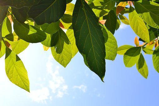 Leaves, Plant, Green, Plant Green, Nature, Garden
