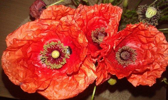 Flower, Bloom, Summer, Poppy, Red, Plant, Flora, Nature