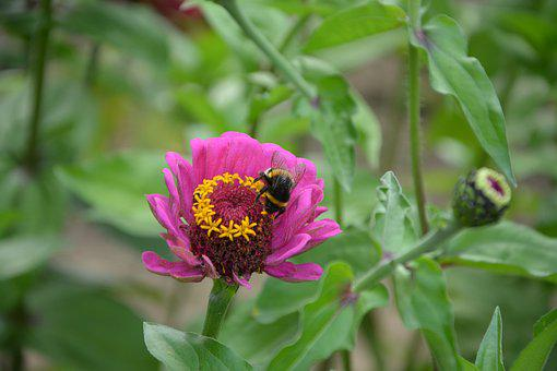 Bees, Insect, Flower, Forage, Garden, Nature