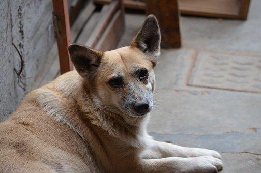 Bitch, Dog, Can, Animals, Pets, Animal, Canine