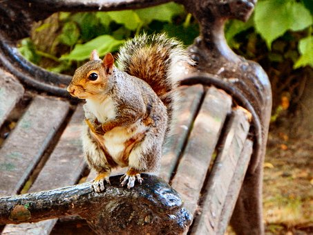 Squirrel, Bench, Seat, Nature, Cute, Animal, Small
