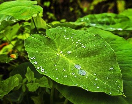 Dew, Leaf, Green, Garden, Green Leaf, Plant, Freshness