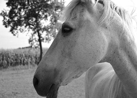 Horse, Profile, Head Eye, Horseback Riding