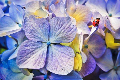 Ladybird, Flowers, Garden, Bug, Ladybug, Nature, Plant