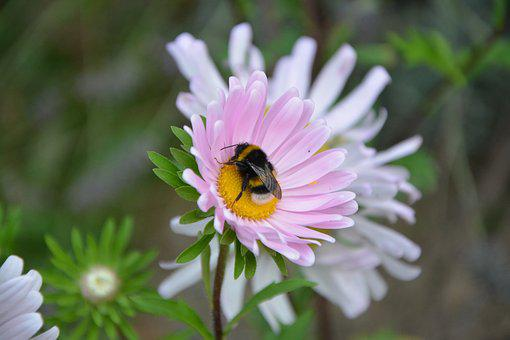 Bee, Flower, Forage, Insects, Nature, Pollinator
