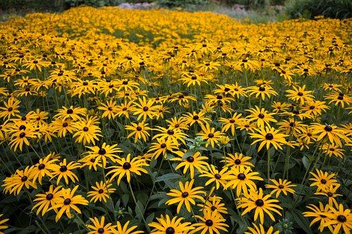Flowers, Nature, Summer, Plant, Flower, Garden
