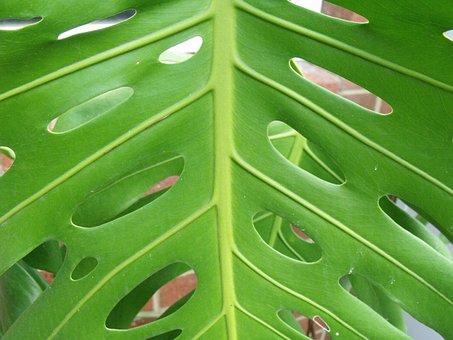 Palm, Leaf, Elephant Palm, Tropic, Print, Foliage