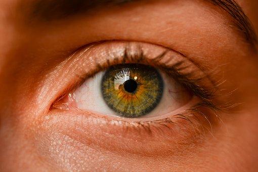 Eye, Iris, Sight, Eyebrows, Algae, Macro, Detailed
