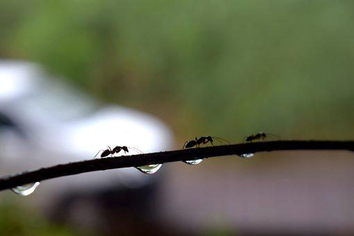 Water, Droplets, Drop, Clean, Fresh, Clear, Nature