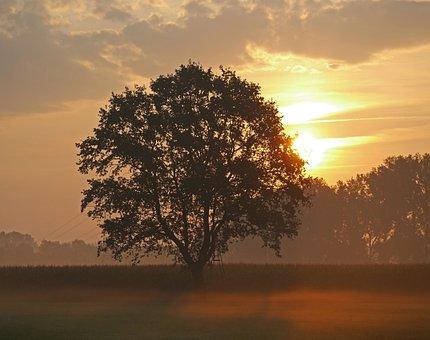 Morning Sun, Ground Fog, Single Tree, Cornfield