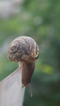 Snail, Nature, Struggle, Shell, Environment, Wildlife