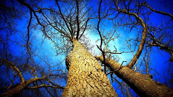 Winter, Tree, Nature, Cold, Landscape, Season, Sky