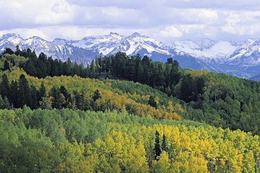 Mountain, Fall, Leaves, Nature, Autumn, Colorado