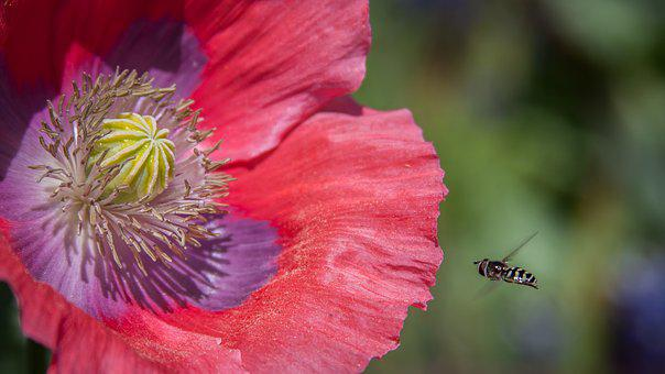 Nature, Bees, Pollen, Spring, Flower, Insect, Macro