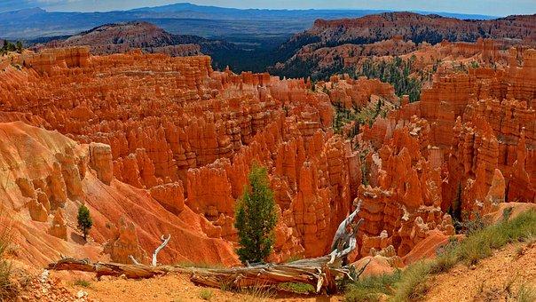 Usa, Bryce Canyon, Root