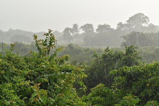 Rain, Rainy Day, Drops, Drizzle, Nature, Plants, Field