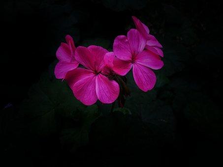Floral, Flor, Flower, Decoration, Design, Blossom, Leaf