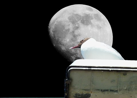 Gull, Moon, Bird, Birds, Mystical, Moonlight, Sky, Fly