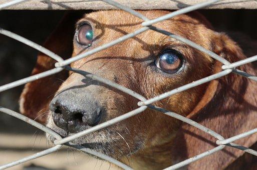 Dachshund, Cage, Dog, Animal, Pet, Man's Best Friend