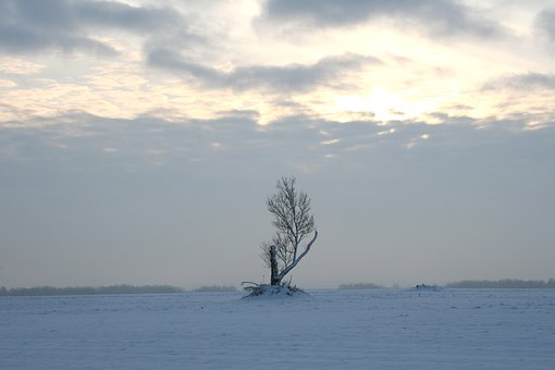 Tree, Winter, Snow, White, Cold, Sky, Alone, Loneliness