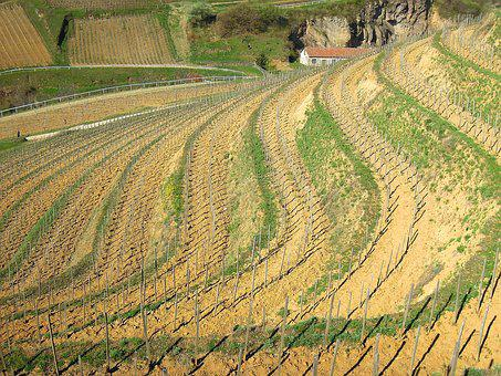 Vineyard, Grape, Plantation, Mountain, Terrace
