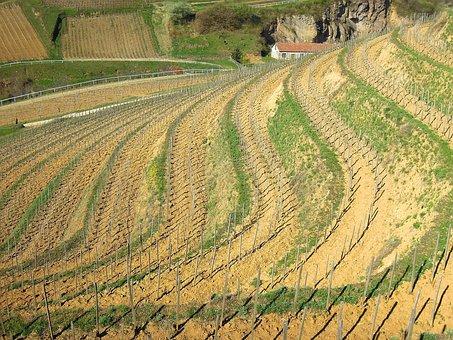 Vineyard, Grape, Plantation, Mountain, Terrace