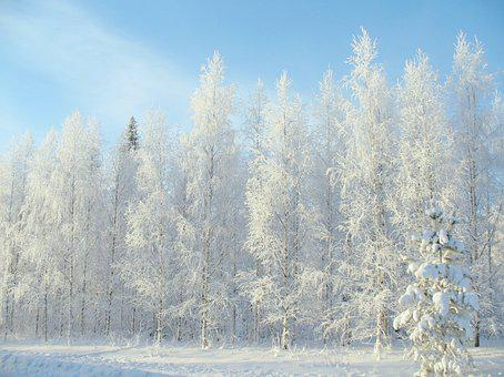 Winter, Forest, Snow, Winter Road, Pine, Trees, Nature