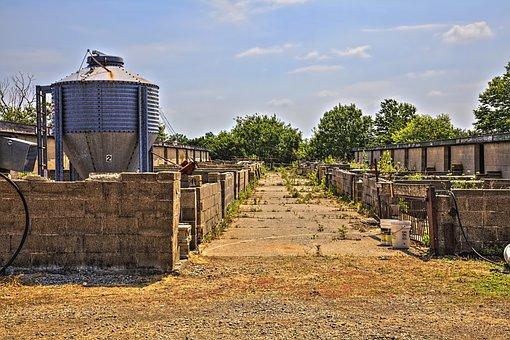 Pig Farm, Barn, Barns, Rustic, Art, Digital Art