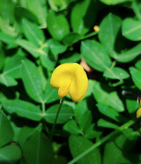 Flower, Yellow, Tiny, Plantation