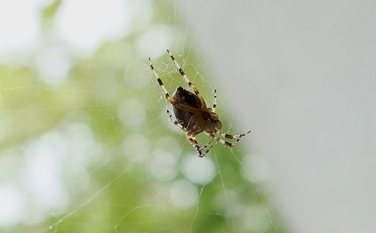 Legs, Garden, Insect, Spider, Morning, Nature, Network