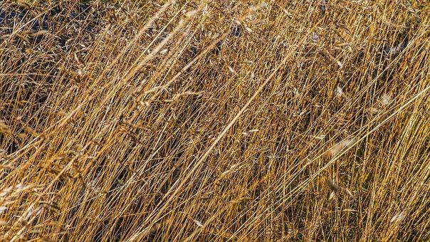 Grasses, Macro, Close Up View, Grass, Wild Grass, Close