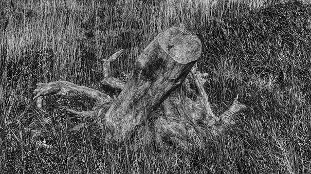 Black White, Tree Stump, Dehydrated, Nature, Mood