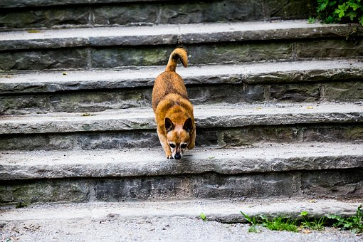 Dog, Stairs, Pet, Animal, Young, Cute, Outdoor, Brown