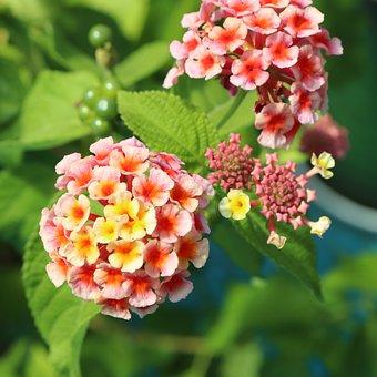 Flower, Flowers, Plant, Plants, Colorful, Rainbow