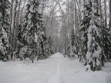 Forest Trail, Snow, Frost, Winter, Cold, White