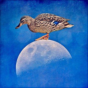 Funny, Laugh, Humor, Fun, Duck, Moon, Space, Cosmos