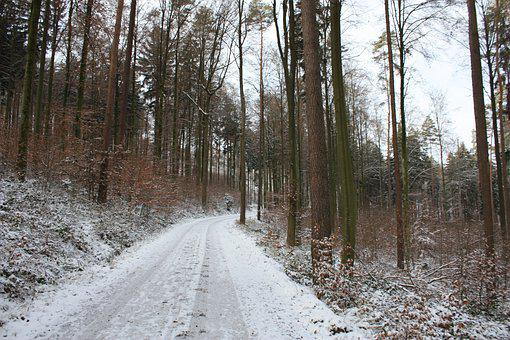 Winter, Away, Forest, Trees, Winter Mood, Cold, White
