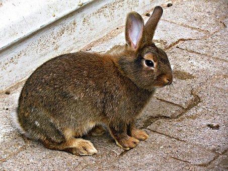 Bunny, Rabbit, Animal, Fur, Lovely Small, Cuddly