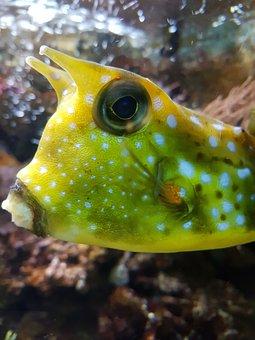 Fish, Water, Nature, Aquarium, Underwater, Zoo, Yellow